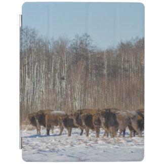 Manada del bisonte cover de iPad