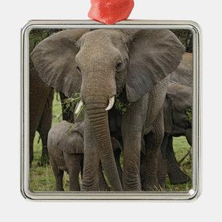 Manada del elefante africano, africana del Loxodon Ornamento De Reyes Magos