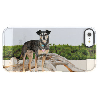 Manchester Terrier X - Jordania - Derr Funda Transparente Para iPhone SE/5/5s