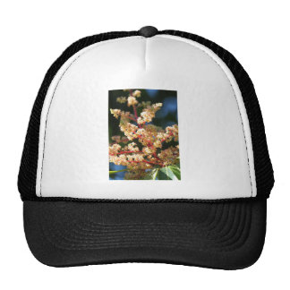 Mangoflowers Gorra