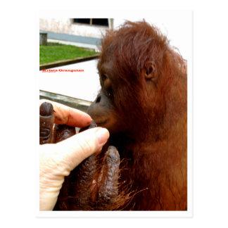 Manicura del orangután postal