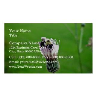 Manosee la abeja en una flor del cardo tarjetas de visita