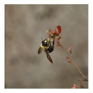 Manosee la abeja, impresión de acrílico