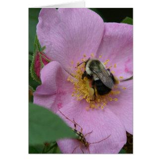 Manosee la abeja, tarjeta de felicitación