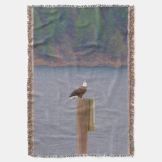 Manta Eagle calvo que llama de un poste por el lago