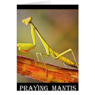 Mantis religiosa de Connecticut Tarjeta De Felicitación