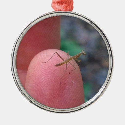Mantis religiosa del bebé en el dedo adorno