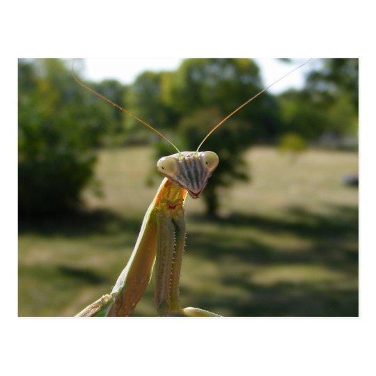 Mantis religiosa postal