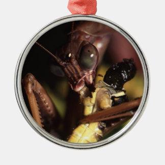 mantis religiosa que come el saltamontes ornamento para reyes magos