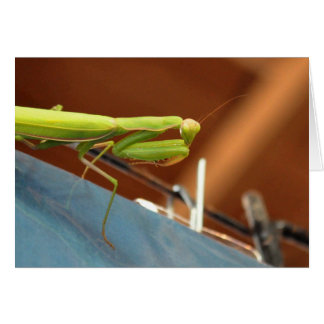 Mantis religiosa tarjeton