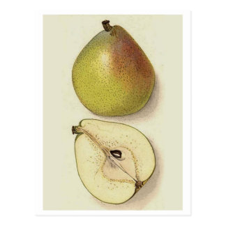 manzana postal