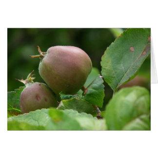 Manzanas del otoño tarjeta de felicitación