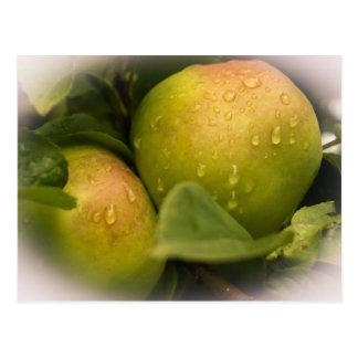Manzanas verdes frescas con una frontera brumosa postal