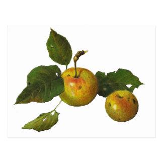 Manzanas verdes salvajes en lápiz del color: Arte Postal