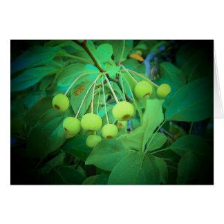 Manzanas verdes felicitaciones