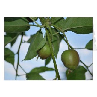 Manzanas verdes tarjeton