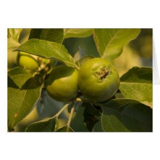 manzanas verdes tarjeta de felicitación