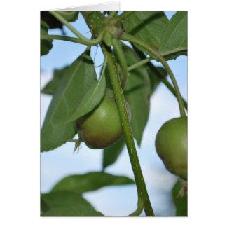 Manzanas verdes tarjetón