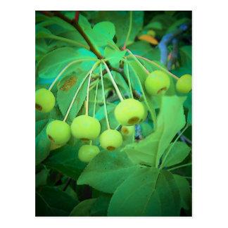 Manzanas verdes tarjetas postales