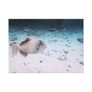 Mar coralino tropical de la turquesa de los lienzo