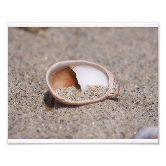 Mar Shell 02 Foto