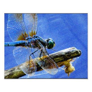 Maravilla de la libélula foto