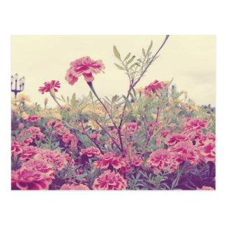 Maravillas en colores pastel postales