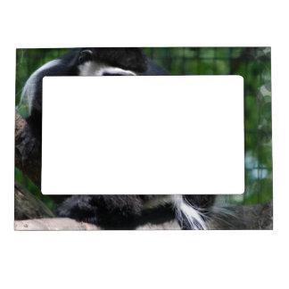 Marco magnético del mono blanco y negro foto de imanes