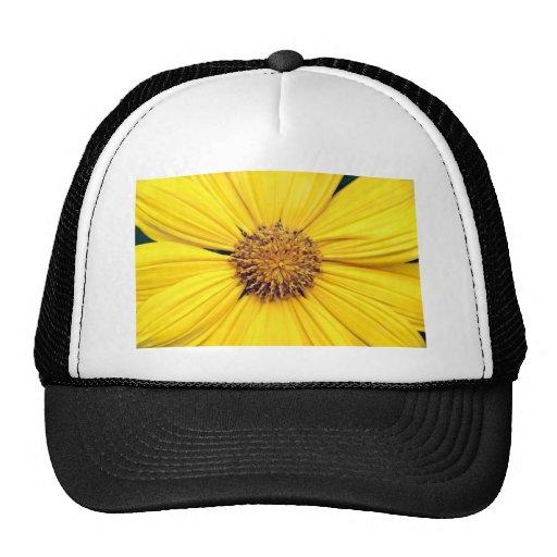 Margarita amarilla Background.jpg del Gerbera Gorras De Camionero