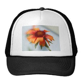 Margarita anaranjada gorras
