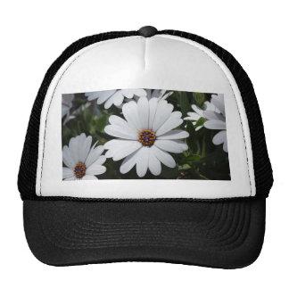 Margarita blanca en la floración gorra