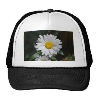 Margarita blanca gorras