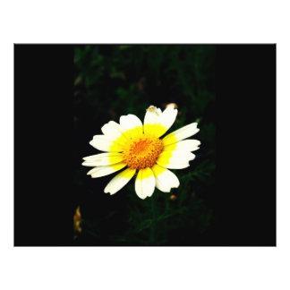 Margarita de corona folleto 21,6 x 28 cm