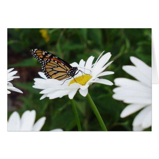 Margarita de la mariposa tarjeta de felicitación