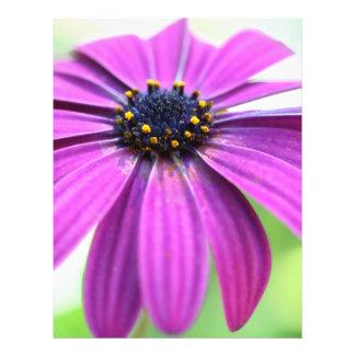 Margarita púrpura adaptable folleto 21,6 x 28 cm