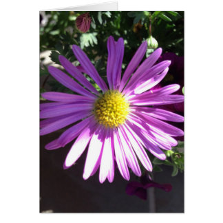Margarita púrpura tarjeta pequeña
