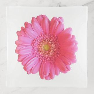 Margarita rosada del gerbera