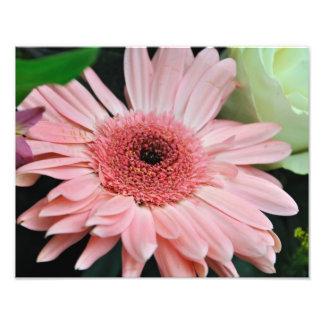 Margarita rosada impresiones fotograficas