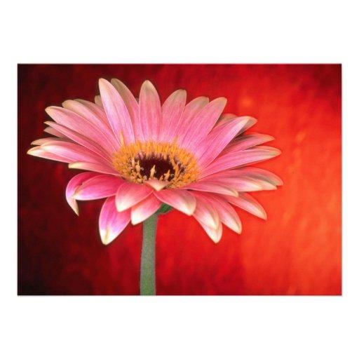 Margarita rosada y amarilla perfecta hermosa del g invitacion personalizada