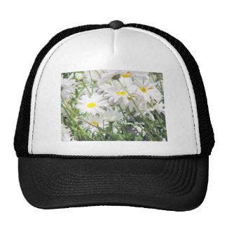 Margaritas soleadas gorras