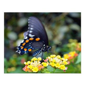 """Mariposa 16"""""""" impresión de la foto x20"""