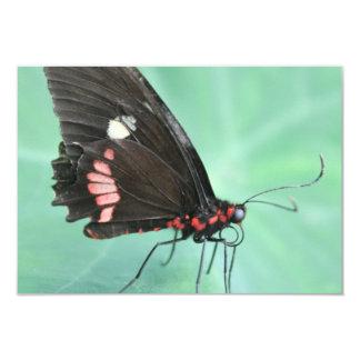 Mariposa al borde de una hoja comunicado personal