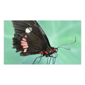 Mariposa al borde de una hoja tarjetas de visita