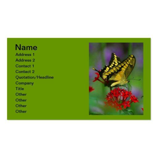 Mariposa amarilla de Swallowtail del tigre Plantilla De Tarjeta De Negocio