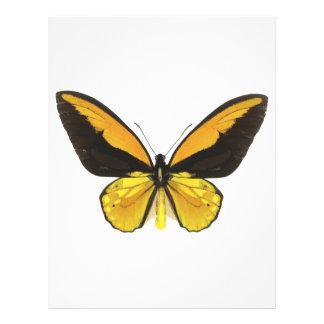 Mariposa amarilla y negra folleto 21,6 x 28 cm