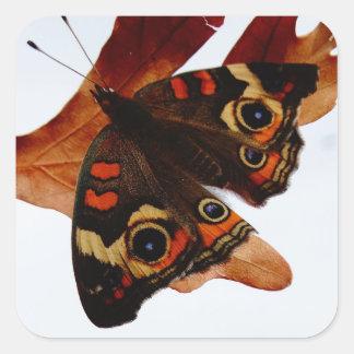 mariposa anaranjada con los puntos azules pegatina cuadrada