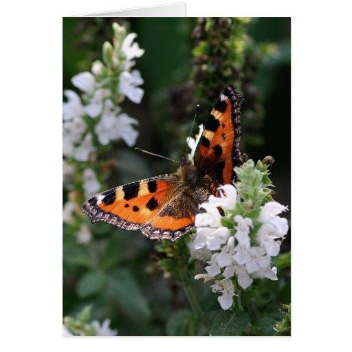 Mariposa anaranjada y negra en las flores blancas felicitaciones