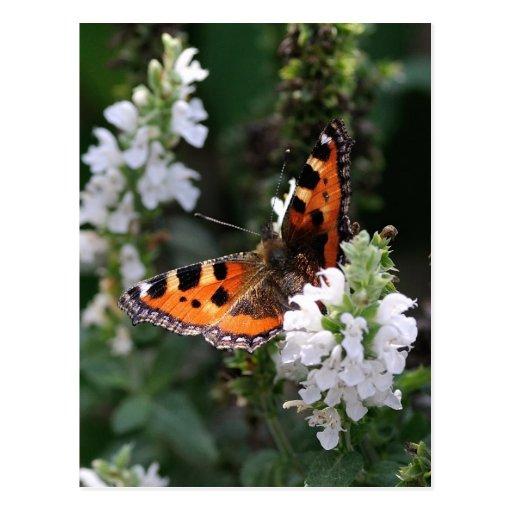 Mariposa anaranjada y negra en las flores blancas postales