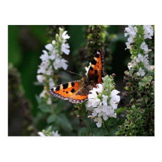 Mariposa anaranjada y negra en las flores blancas