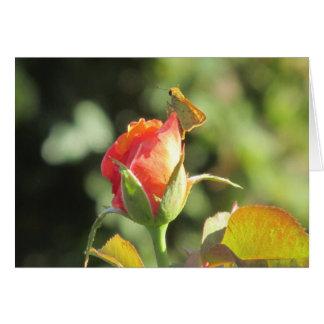 Mariposa ardiente del capitán en capullo de rosa felicitaciones